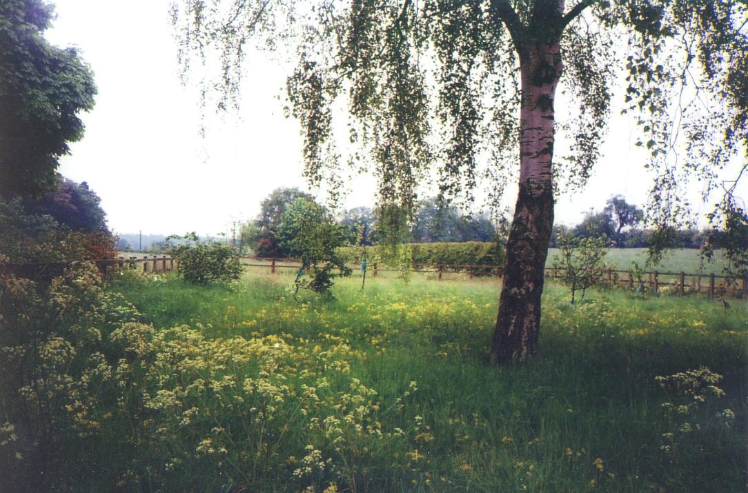 wildflowermeadow2